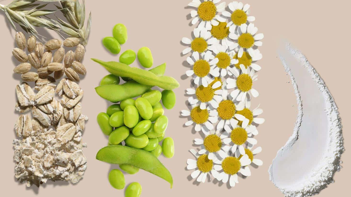 Ingrédients naturels d'AVEENO® pour les soins de la peau