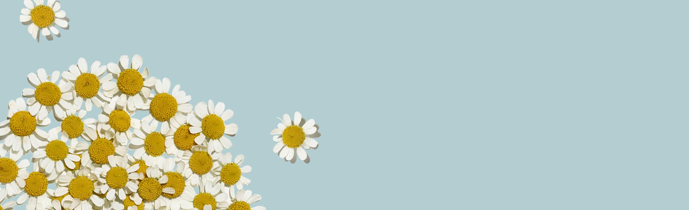 amas de fleurs sur fond bleu pâle