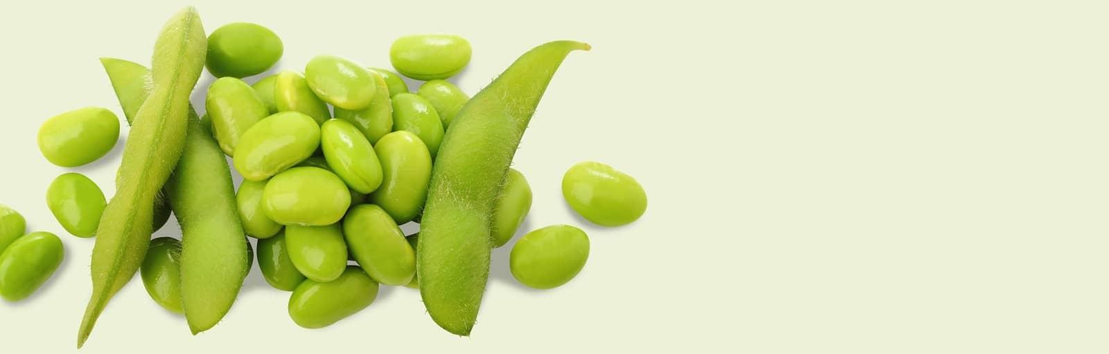 Le soja, ingrédient des soins de la peau AVEENO®