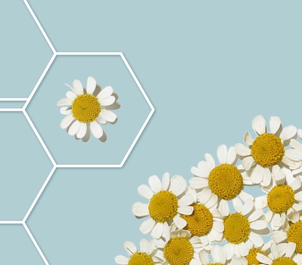 fleur dans une grille de molécule sur fond bleu pâle