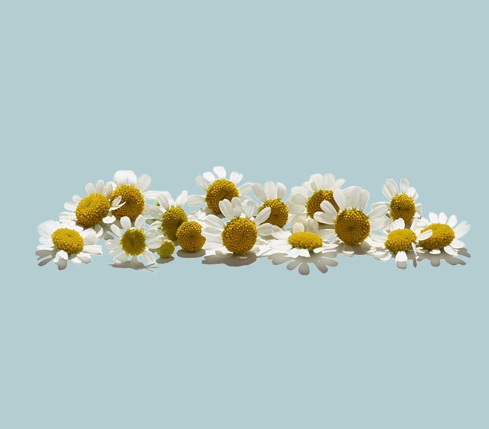 rangée de fleurs sur fond bleu pâle